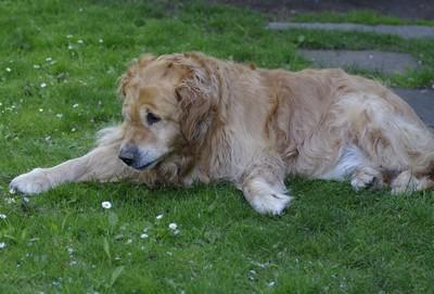 dovolená chorvatsko se psem